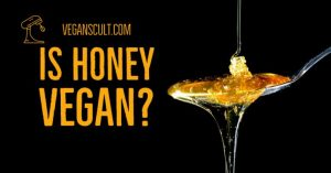 is honey vegan | veganscult.com