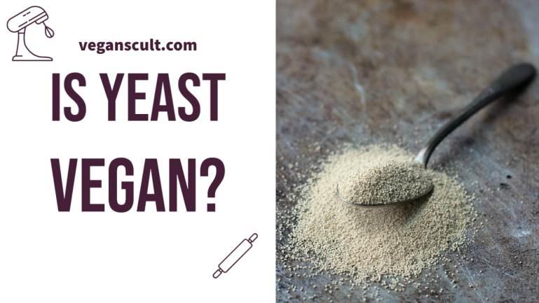 is yeast vegan | veganscult.com