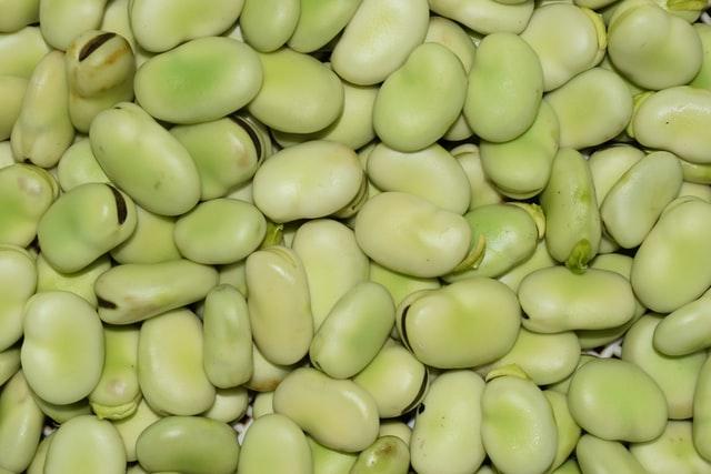 fava beans | is falafel vegan? | veganscult.com